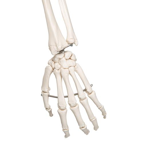 Scheletro Stan A10 su cavalletto in metallo con 5 rotelle - 3B Smart Anatomy, 1020171 [A10], PON Biologia e Chimica - Laboratorio