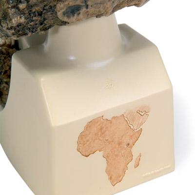 3B Scientific VP755//1 Replica di Cranio Australopithecus Boisei