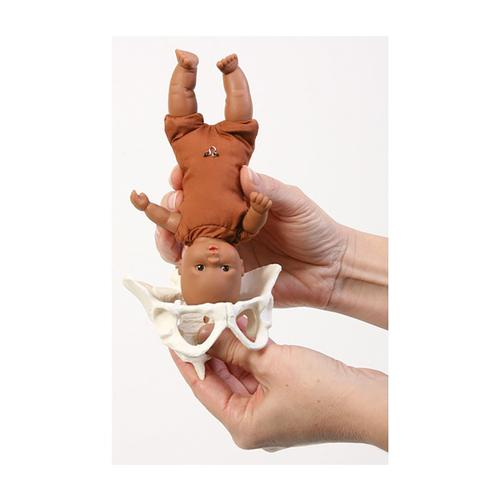 Mini Model Set: Pocket Uterus, Baby, and Pelvis (6 Pieces), 1018407 [W43092], Ostetricia