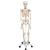 Scheletro Stan A10 su cavalletto in metallo con 5 rotelle - 3B Smart Anatomy, 1020171 [A10], PON Biologia e Chimica - Laboratorio (Small)