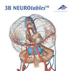 3B NEUROtables™ Francese, 1002494 [S0290], Cervello