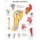 Shoulder and Elbow Chart, 1001482 [VR1170L], Sistema Scheletrico