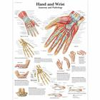 Hand and Wrist Chart - Anatomy and Pathology, 1001484 [VR1171L], Sistema Scheletrico