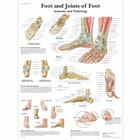 Foot and Joints of Foot Chart - Anatomy and Pathology, 1001490 [VR1176L], Sistema Scheletrico