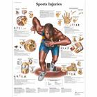Sports Injuries, 1001494 [VR1188L], Muscolo