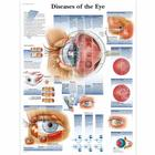 Diseases of the Eye, 1001498 [VR1231L], Occhi